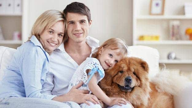 Wills & Trusts dog-young-family Direct Wills Lutterworth